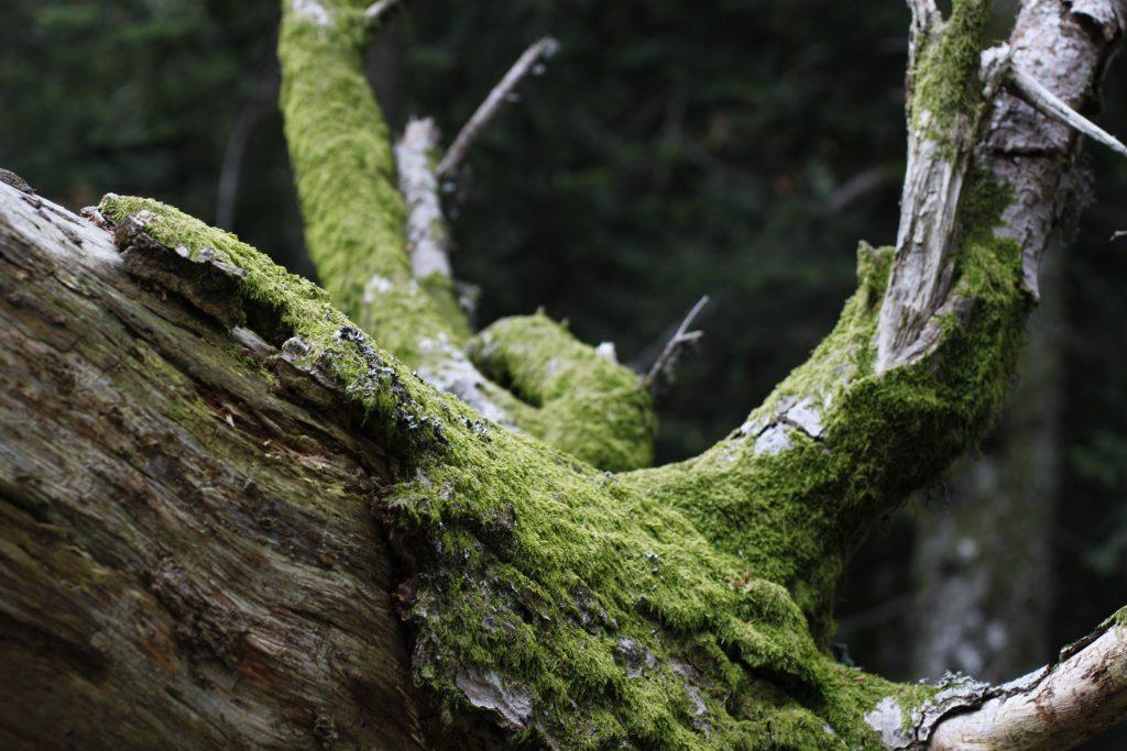 Parc naturel des Monts d'Ardèche - 2015